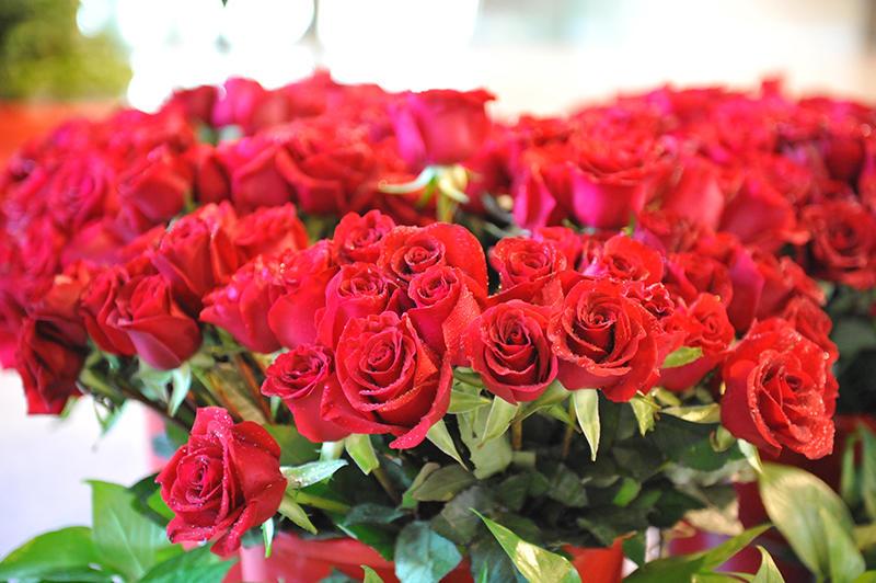 清晨八点,带着露水的红玫瑰已经摆放在设计院大堂,静候与女神们的相遇。